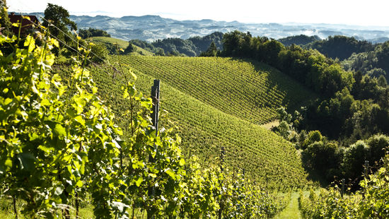 A picture shows vineyards in Südsteiermark