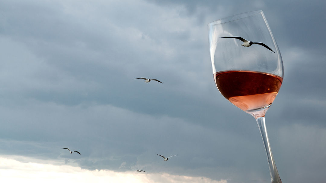 A picture shows a glass of wine and seagulls