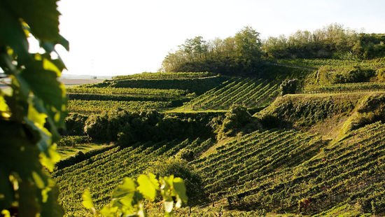 Vineyards are pictured.