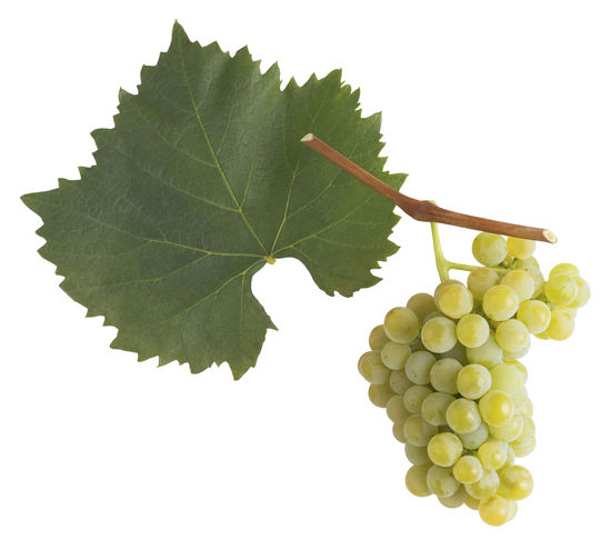 A picture shows the grape and leaf of the Blütenmuskateller, © AWMB/Blickwerk Fotografie.