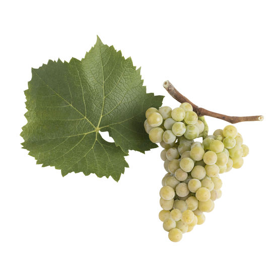 A picture shows the grape cluster and leaf of the Muscairs, © AWMB/Blickwerk Fotografie.