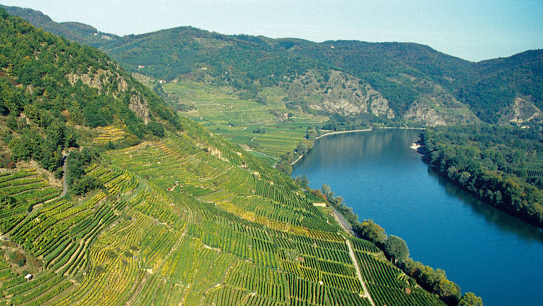 A picture shows vineyards alongside the danube