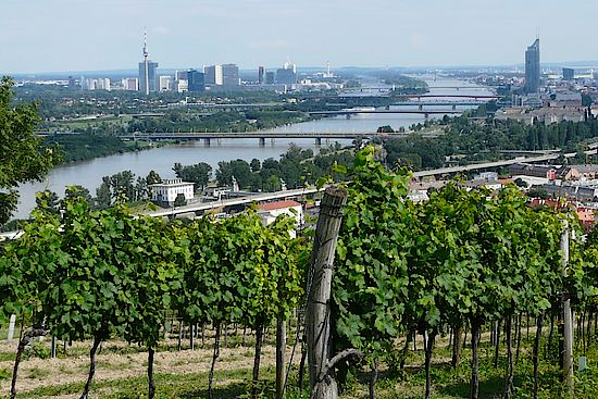 A picture shows a Vineyard at Nussberg