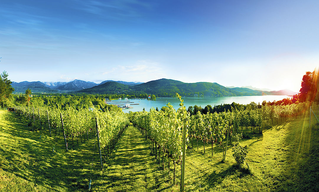 A picture shows the wine-growing region Bergland
