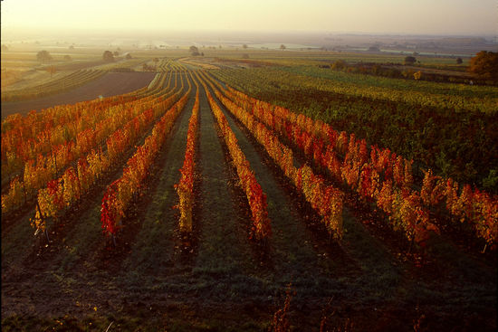 A picture shows a vineyard in Burgenland from above, © AWMB/Lukan.
