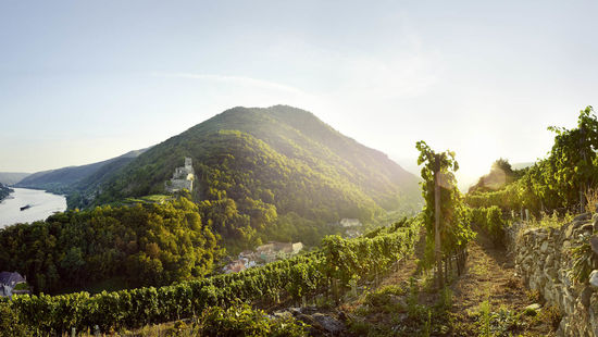 A picture shows vineyards in the Wachau at sundown.