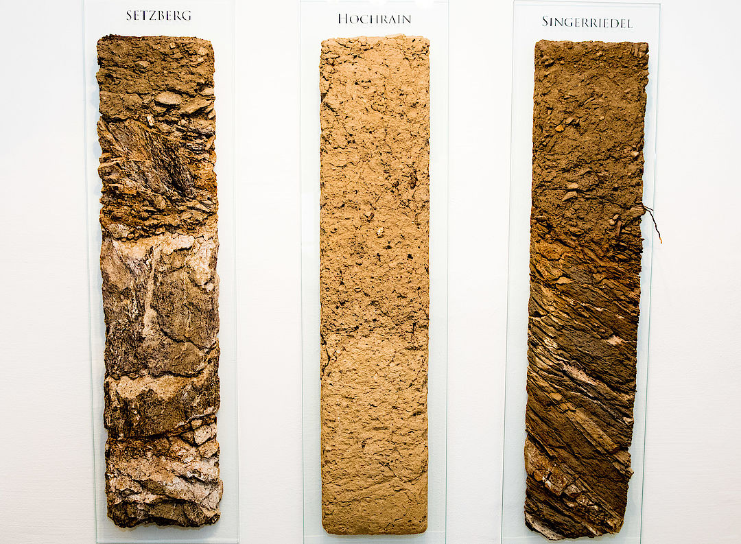 A picture shows three soil profiles from Wachau