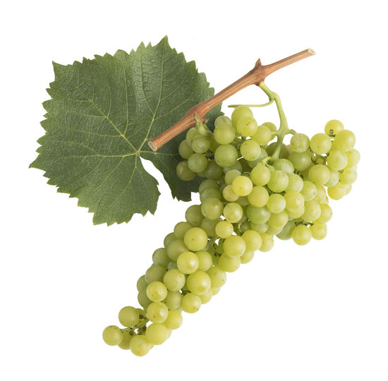 A picture shows the grape cluster and leaf of the Goldmuskateller, © AWMB/Blickwerk Fotografie.