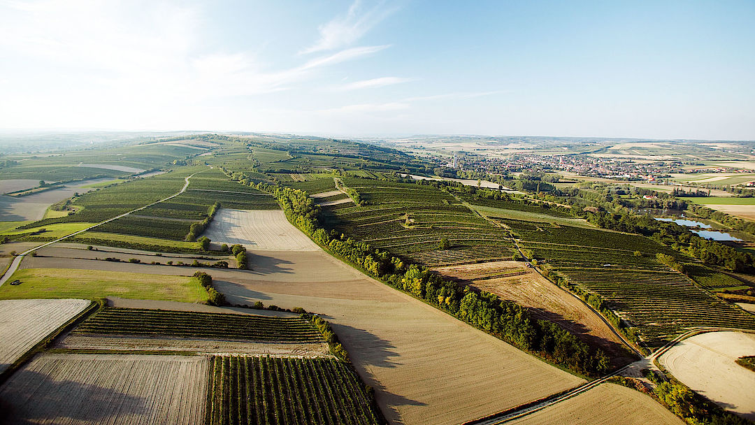 The picture shows vineyards at Wagram