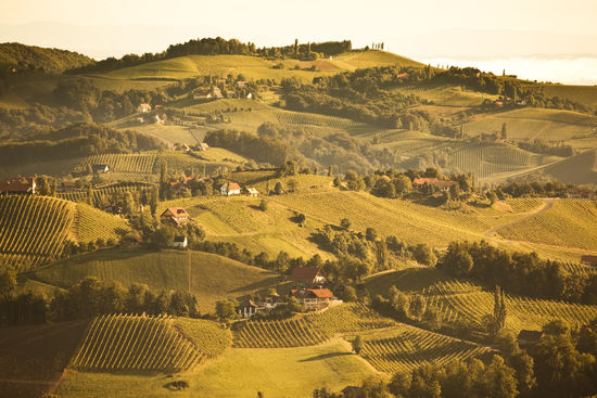 A picture shows a sunrise over Styrian vineyards, © AWMB/Anna Stöcher (anna@schauen.at).